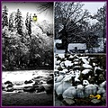 bwcolourfriday funfriday collage