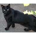 sooty black meow beeston nottingham
