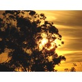 sunrise Aussie bush perth littleollie