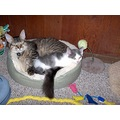cat kitten cody aedan bed nap sleep play toy fun fish paws rescue adopt