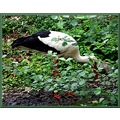 switzerland basel zoo animal stork switx basex zoox animx birdx storx