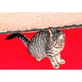 cat savona italy animal mammal feline