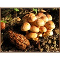 mushroom forest nature France october