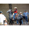 texas fort worth stockyards horse
