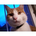 cat pet animals max