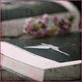 sarah moon swan book still life