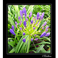 omicron friend friendship fotothing bithday chile flower flowers nature