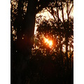 bush sunset nature