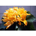Pumpkin flowers - these are usually used in soups, but can also be deep fried in batter.