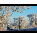 frost trees nature mendip mendiphills winter somerset somersetdreams