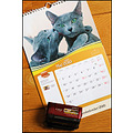 holly kajsa russianblue cats calendar may