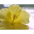 flower yellow nature