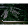 stlouis missouri us usa tree travel brown green white snow hp winter winter2002