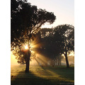 sunrise trees perth hills littleollie