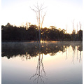 reflectionthursday sunrise light trees fog farm dam perth hills littleollie