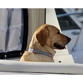 dog yacht Tampa Florida