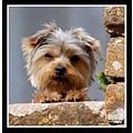 woof dog cute animal mendips mendiphills somerset somersetdreams