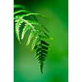 nature closeup fern greenish green