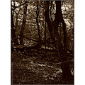 nature forest wood tree bush leaves litter monochrome bw