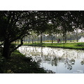 park tree reflection poulets bangkok thailand 2009