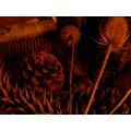 still life nature corner fir cones teasals