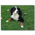 france aixenprovence animal bernese dog cenna franx aixex animx dogx