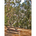 albanycalifornia park bench trees autumn funfph