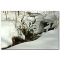 reflectionthursday creek bamboo winter snow