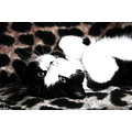 black and white cat kitten cute
