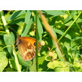 Butterfly Insect Nature