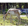 animals deer