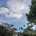 sky clouds summer trees palm palmtrees palms
