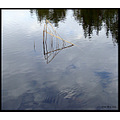 lake reflection sky cloud tree water reed