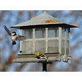 birds chickadee goldfinch birdfeeder wildlife