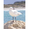 seagull gull bird animal beach ocean