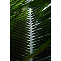 PalmTree Palmleaf palm leaf tropical