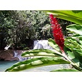 waterfall flower red tropical Jamaica