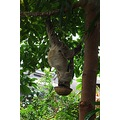 sloth animal nature sleep sleepy