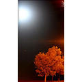Night Nightshot tree moon longshot road Iran Mahmoudabad sky dark Pers