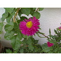 Flowers special natural pot growth one 1 two 2 three 3 four 4 five 5 abcde words