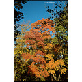 stlouis missouri us usa landscape fall tree sky blue red 2007