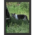 green grass bush kitty cat nature closeup milibuhscatclub liescatsclub