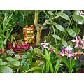 sfconsfph3 orchids tropical plants tiger chinese statue