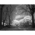 infrared bw tree park summer nature