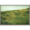 Green Meadow Fence Landscape California Pankey Wildspirit