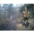 Swift ride on me mountain bike thru me local woods the other week revealed some chain saw malarky...