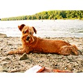 dog portrait river beach osijek croatia