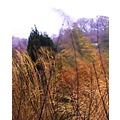 nature garden grass foliage leaf leaves wind weather