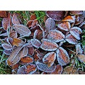 Frosty Leafes Angelholm Skane Sweden 2010 November
