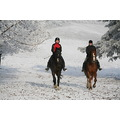 On Christmas Eve 07, me and my friend took our horses out for a nice hack in our beautiful countr...